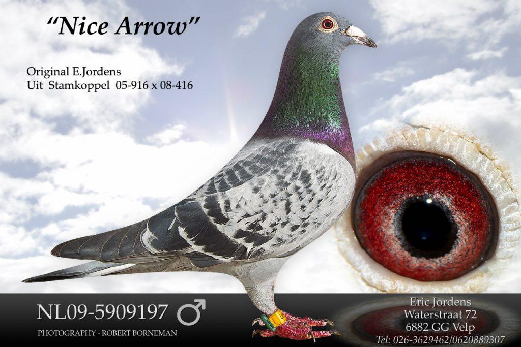 nl09-5909197-nice-arrow